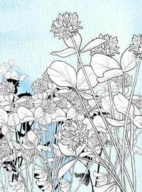 シロツメクサのブラシ 2 - 山田南平Blog