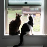 ホルタ、2週間 - 猫と夕焼け