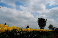 チュウリップ祭り、最終日 - 花々の記憶    happy_momo