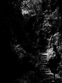 楽園への階段 - 節操のない写真館
