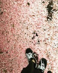 Pink carpet - Fragoline**