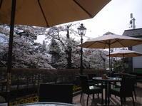 オープンテラス席でお花見 @ 北出丸カフェ。 - カメラ小僧ぷーちゃんのGRフォトダイアリー。