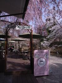 照姫しだれ桜とソフトクリーム @ 鶴ヶ城会館。 - カメラ小僧ぷーちゃんのGRフォトダイアリー。