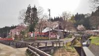 千手院の桜は八分咲き! - 浦佐地域づくり協議会のブログ