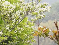 春暁 - Spring PHOTO