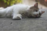 チロ - ネコと裏山日記