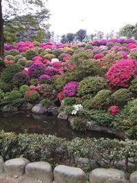 4/16の根津神社 - ここどんな町