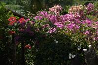 To our original point, Puerto Galera - Nagura Resort - SONGS