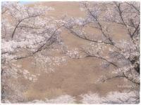 桜/大室山Ⅱ cherry - 花鳥風猫ワン