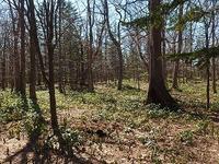 芽吹きの森へ - 北緯44度の雑記帳