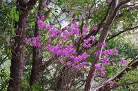 竜爪山 - 山の花、町の花