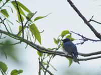 しあわせの青い鳥 - 日々カメラと共に