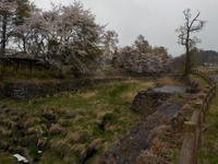 春の風景 - 冬青窯八ヶ岳便り