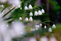 ネコ庭にも次々と花が咲き出しました。 - 玉家の生活報告