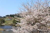 やはり桜は捨てきれず・・・(汗) - かにさんの横歩き散歩日記