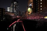 桜の色、、、☆彡 - DAIGOの記憶