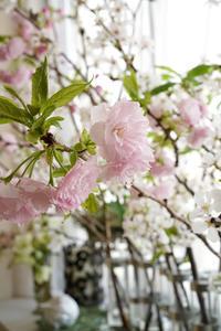 3月のレッスン桜を飾りお迎えをいたしました♪ -  La Fleur