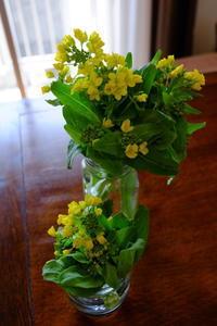 菜の花のおひたし - ナオの*毎日が宝石箱*