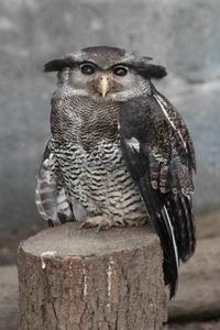 上野動物園の多彩な鳥たち~長老ダルマワシとアカガシラカラスバト - 続々・動物園ありマス。