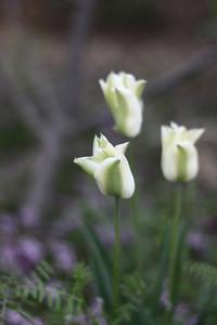 ガーデンの様子4月上旬 - ゆきなそう  猫とガーデニングの日記