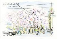 木屋町通の桜 - 風と雲