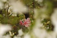 迷いめる思い@神代植物園 - meの写真はザンス