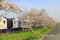 2018 さくら巡り-名鉄電車- - さんたの富士山と癒しの射心館