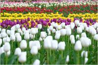 早すぎる春の花(おおさk万博公園にて) - 4にゃん日記+