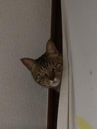 猫のお留守番 キィちゃん編。 - ゆきねこ猫家族