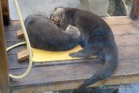 2018/02/24 鳥羽水族館 カワウソひっそりトーク - 墨色の鳥籠
