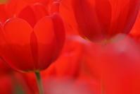 赤く塗りつぶせ - 日記のような写真を