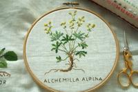 "BLOMSTER ""Alchemilla Alpina"" - はんどめいど☆Time"