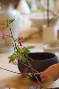 種月はなの会桜を一枝♪ - なづな雑記