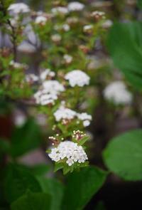 白い花たち - 東京ベランダ通信