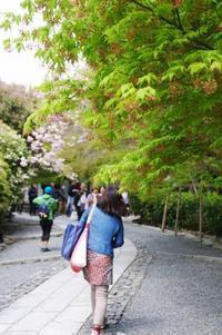 4/7・8、京都の桜~「太陽の塔」旅行、④龍安寺 - 某の雑記帳