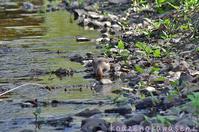 春の小川Ⅱ - 気ままな生き物撮り