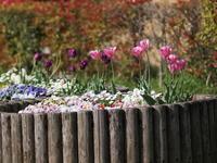 花壇 - エンジェルの画日記・音楽の散歩道