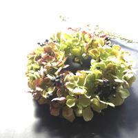紫陽花のドーナツリース ワークショップ - harihariの道草日記