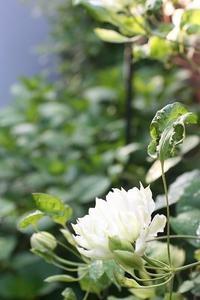 咲いたものいろいろ - WAON~小さな庭と…