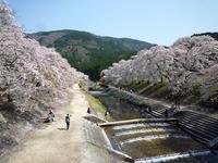 とってもいい所だった 鮎河の千本桜  - mayumin blog 2