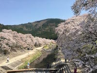 日本三古橋のひとつ 瀬田の唐橋 を通って石山寺へ - mayumin blog 2