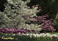 春のいろどり - カンちゃんの写真いろいろ