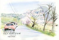 嵯峨広沢池畔の桜 - 風と雲