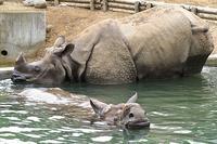 「ター」と「ナラヤニ」のペアリング (三回目) - 動物園放浪記
