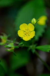 黄色い花 - つれづれ日記