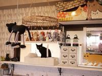 2018年4月22日ゆきねこ雑貨店開店予定のお知らせ。 - ゆきねこ猫家族