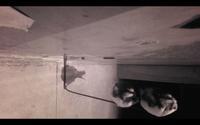 改造赤外線カメラの映像 - モンスとツバメ2