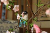 B.B、花*を楽しむ♪ - FUNKY'S BLUE SKY