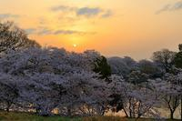 岡山の桜 - デジカメ入門