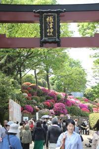 根津神社・つつじ祭り - マルオのphoto散歩